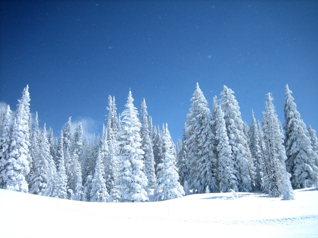I'm dreaming of a white Christmas....