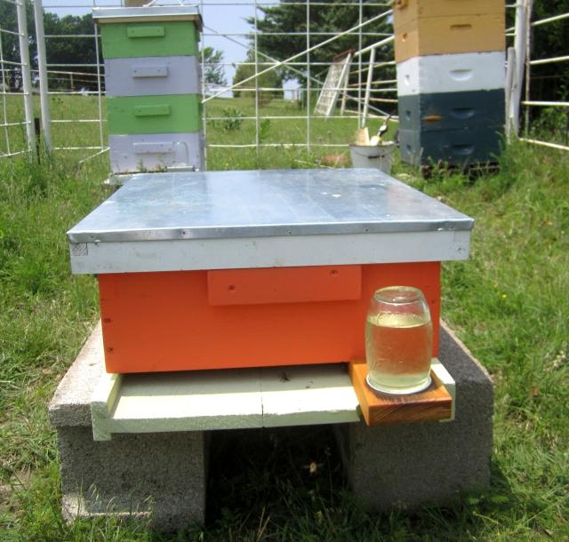Hive - Queen Keri