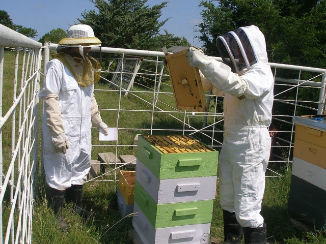 Is the honey ready for harvest?