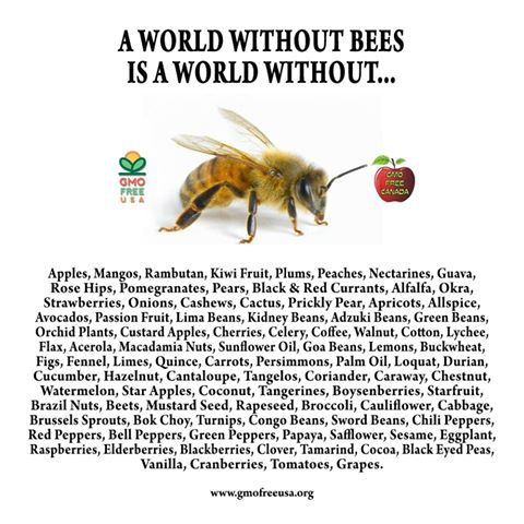 Without Bees