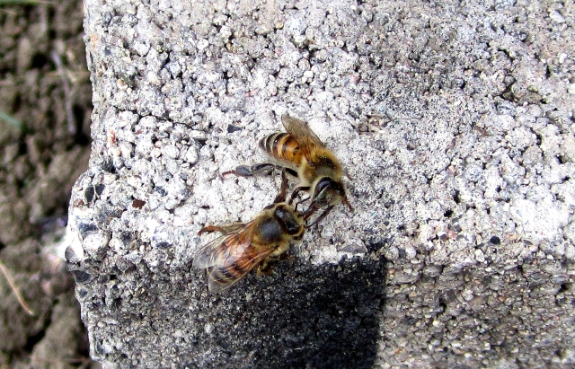 HoneyExchange